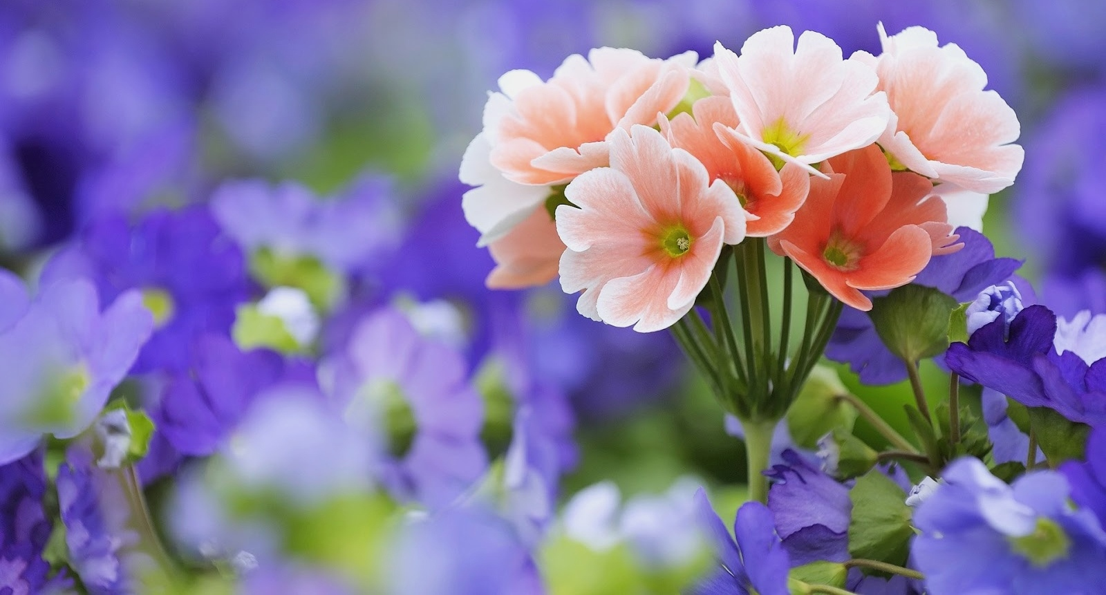 flowers_images_hd